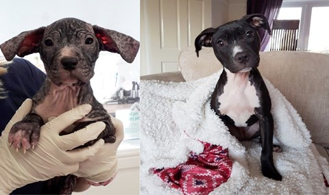 Stockton foster carers in the local news for this doggy transformation